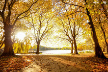 Autumn Park In The Afternoon