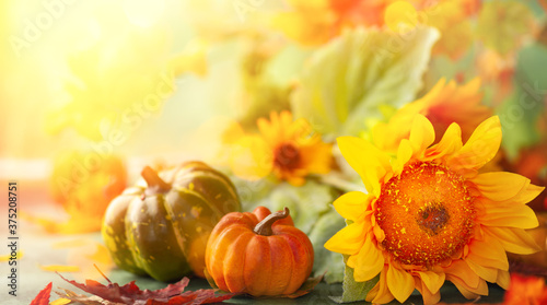 Fototapeta Autumn festive background with sunflowers, pumpkins and fall leaves. Concept of Thanksgiving day or Halloween with copy space obraz na płótnie