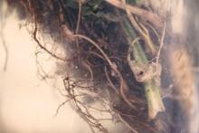 Details Of Underwater Plant Ro...