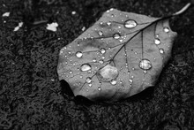 Image Of Dried Leaf With Glistening Water Droplets