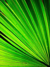 Close Up Image Of Palm Leaf
