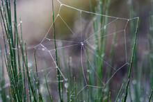 Minimalistic Spider Web With D...