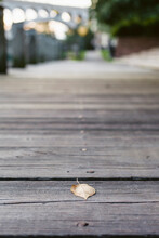 A Leaf Sits Facedown On A Wooden City Path.