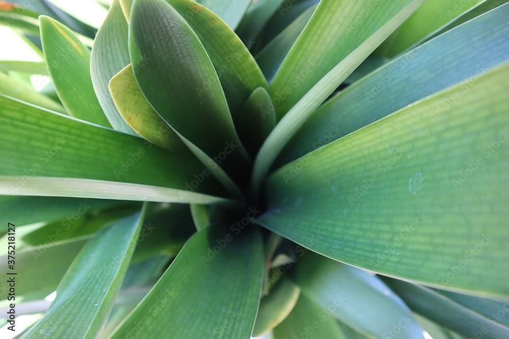 Zielone liście rośliny