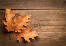 Oak Leaves On A Wooden Board