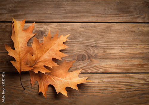 Oak Leaves on a Wooden Board - 375219536