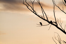 Silhouette Of A Bird On A Dry ...
