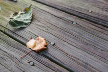 Fall Leaves On A Wooden Backgr...