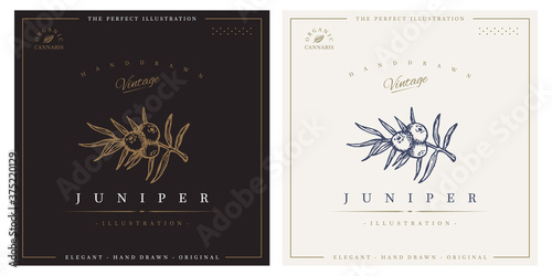 Fototapeta Juniper vintage logo engraving illustration obraz