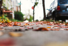 Colorful Leaves On A Sidewalk Next To A Parked Car.