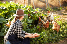 Woman Farmer With Fresh Picked Organic Eggs And Chickens On Farm