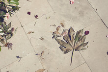 Tree Leaf And Withered Petals ...
