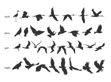 Set Of Silhouettes Of Birds In Motion On A White Background . Vector Illustration