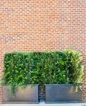 Brick Wall And Bushes