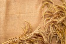 Spike View. Whole, Barley, Har...