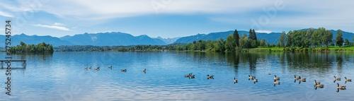 Fotografering Staffelsee Panorama bei Murnau in Bayern mit Alpenblick am Horizont und Enten au