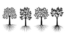 Set Black Trees With Leaves. V...