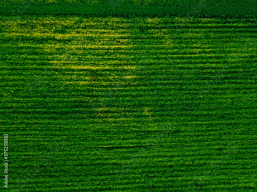 Aerial view of agricultural field taken by drone Tapéta, Fotótapéta