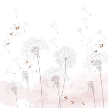 Dandelion Vector Illustration, Rustic Minimalist Style, Dreaming Morning Scene, Soft Pink, White Clean Background