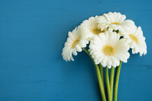 White Gerbera Daisies Flowers On Blue Vintage Background. Greeting Card. Top View, Flat Lay, Copy Space
