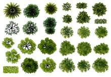 Green Grass Isolated On White Background, Set Of Watercolor Tree Top View For Landscape Plan And Architecture Layout