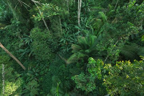 z-tropikalnym-lasem-i-liscmi