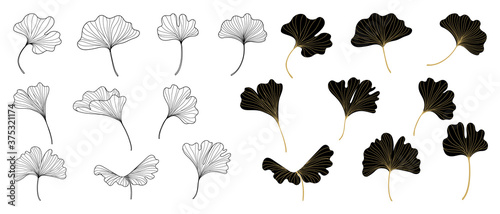 Fotografering Golden Ginkgo leaves background vector
