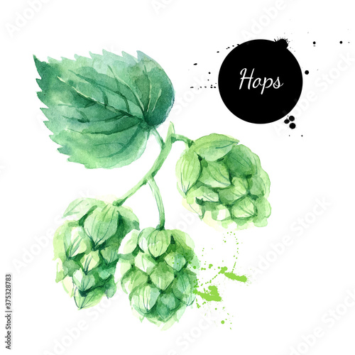 Fotografía Watercolor hops illustration