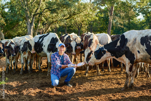 Farmer is working on farm with dairy cows. Fototapet