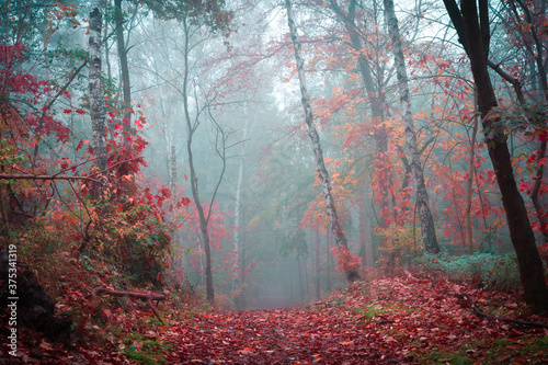 Fotografie, Obraz Wald mit Nebel im Herbst