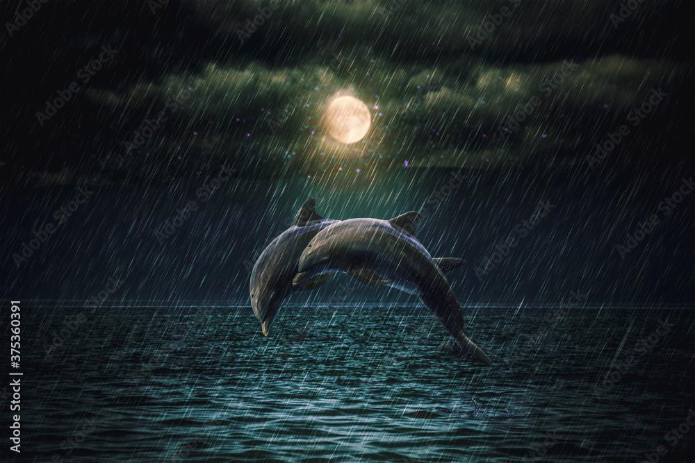 Fototapeta dolphins in the rain