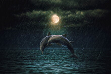 Dolphins In The Rain