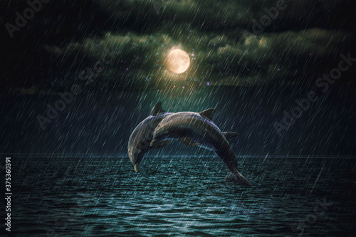 Fotografiet dolphins in the rain