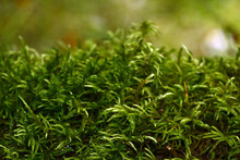Soft Green Moss Hides The Land...