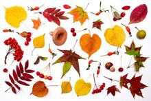 Autumn Leaves, Mushrooms, Berr...