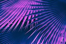 Palm Leaves, Abstract Nature B...