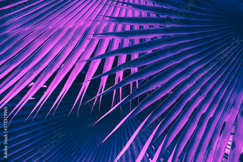 palm leaves, abstract nature background, violet blue toned process Fototapet