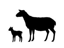 Vector Illustration Of Sheep W...