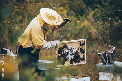 Fototapeta Beekeeper in protective wear working in his apiary