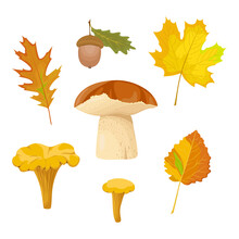 Autumn Forest Collection With ...