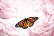 canvas print picture - Amazing monarch butterfly on beautiful flowers, closeup