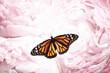 Amazing monarch butterfly on beautiful flowers, closeup