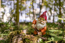 Garden Gnome In The Forest