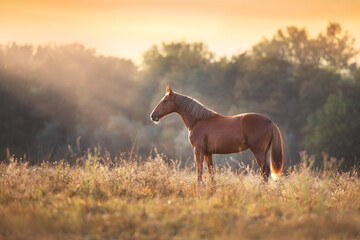 Red horse standing in meadow