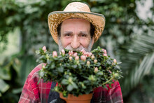 Close Up Of Smiling Bearded Senior Man Gardener Wearing Straw Hat And Red Checkered Shirt, Posing On Camera While Hiding Half Of Face With Beautiful Flowering Plant In Pot