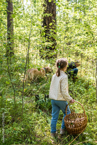 Girl walks through the forest with a basket of mushrooms