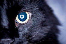Close-up Of An Open Black Cat ...
