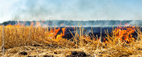 Papel de parede Wildfire on wheat field stubble after harvesting near forest