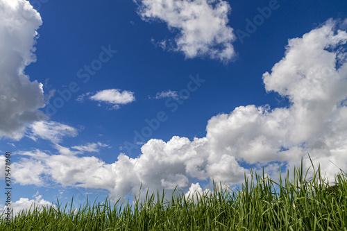 Fotografía 土手の草むら秋空に層積雲が浮く