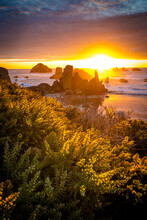 Sunset At Bandon Beach State Park With Yellow Gorse Flowers In Foreground.
